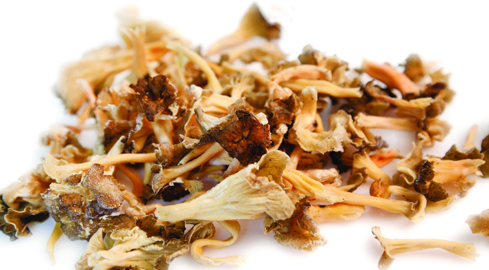cantharellus lutescens